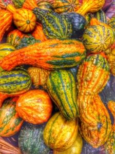 pumpkins_harvest